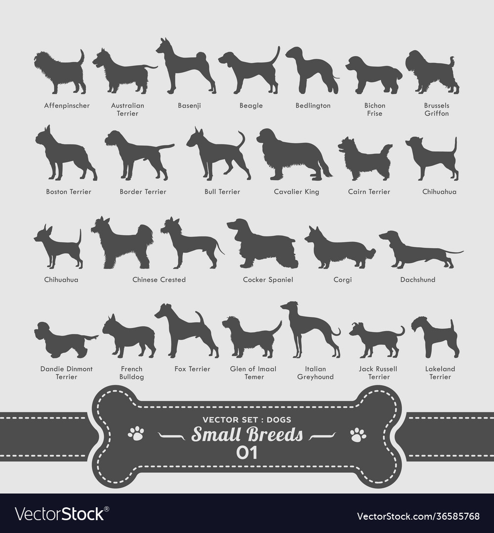 Dog set - small breeds collection