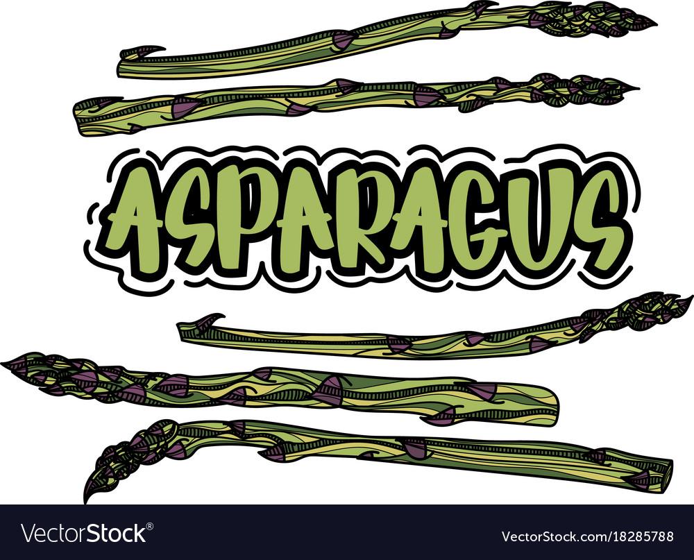 Asparagus vegetable stem