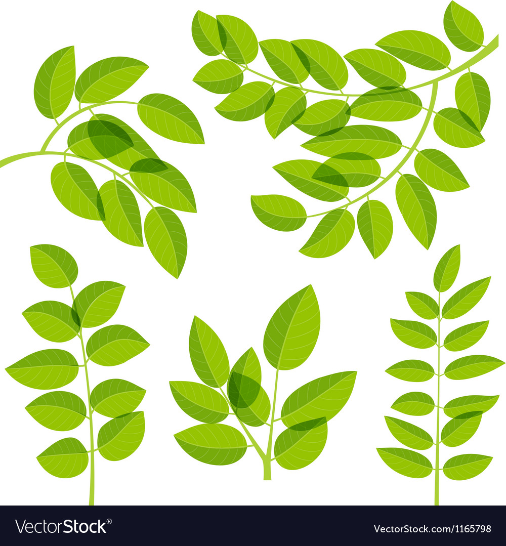 Leaves elements vector image