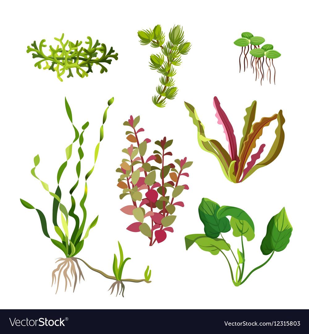 Aquarium plants set Cartoon underwater algae
