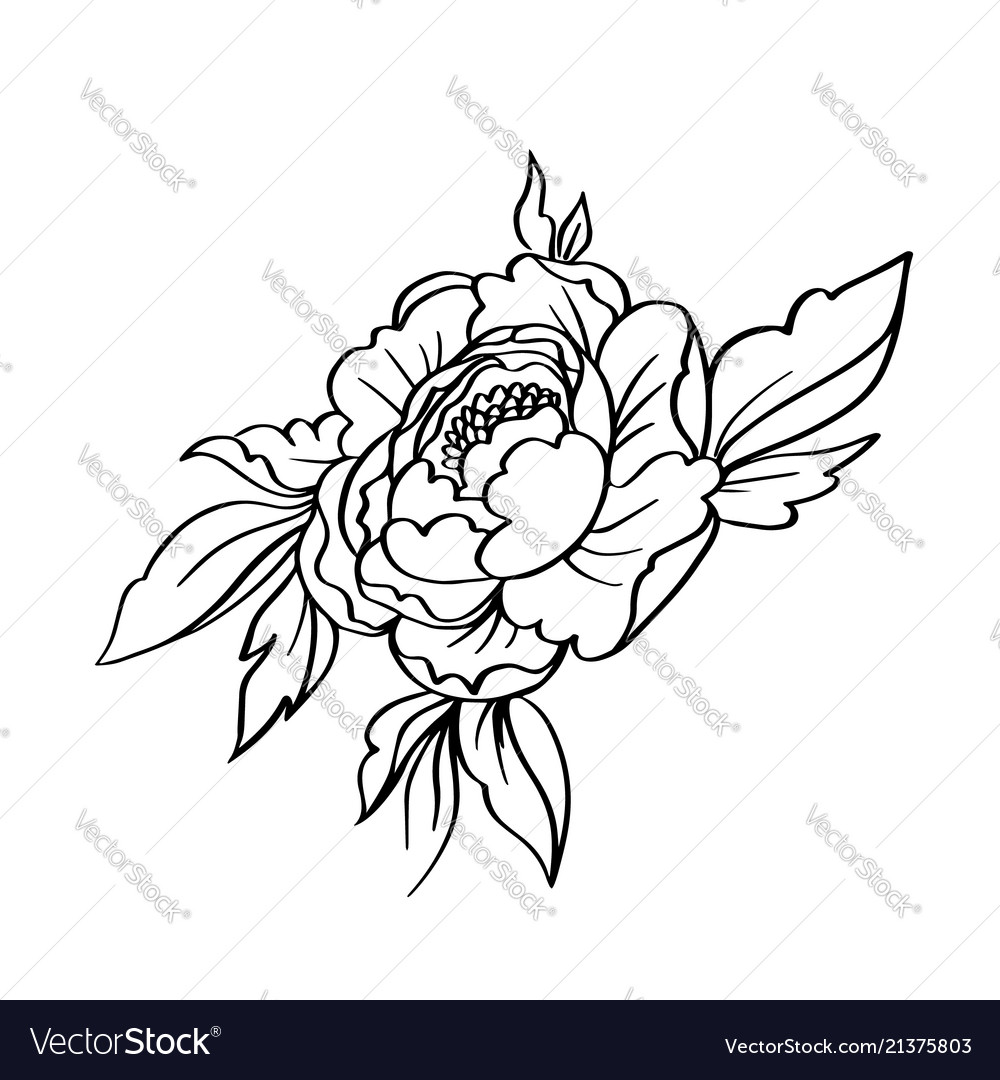 Black white contour simple sketch peony