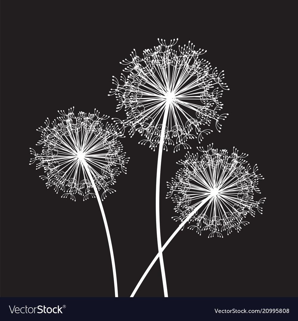 Black and white dandelion set