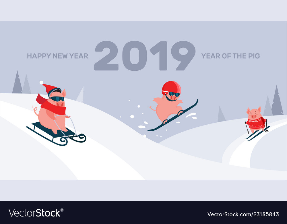 Funny cartoon pigs sliding skiing and vector