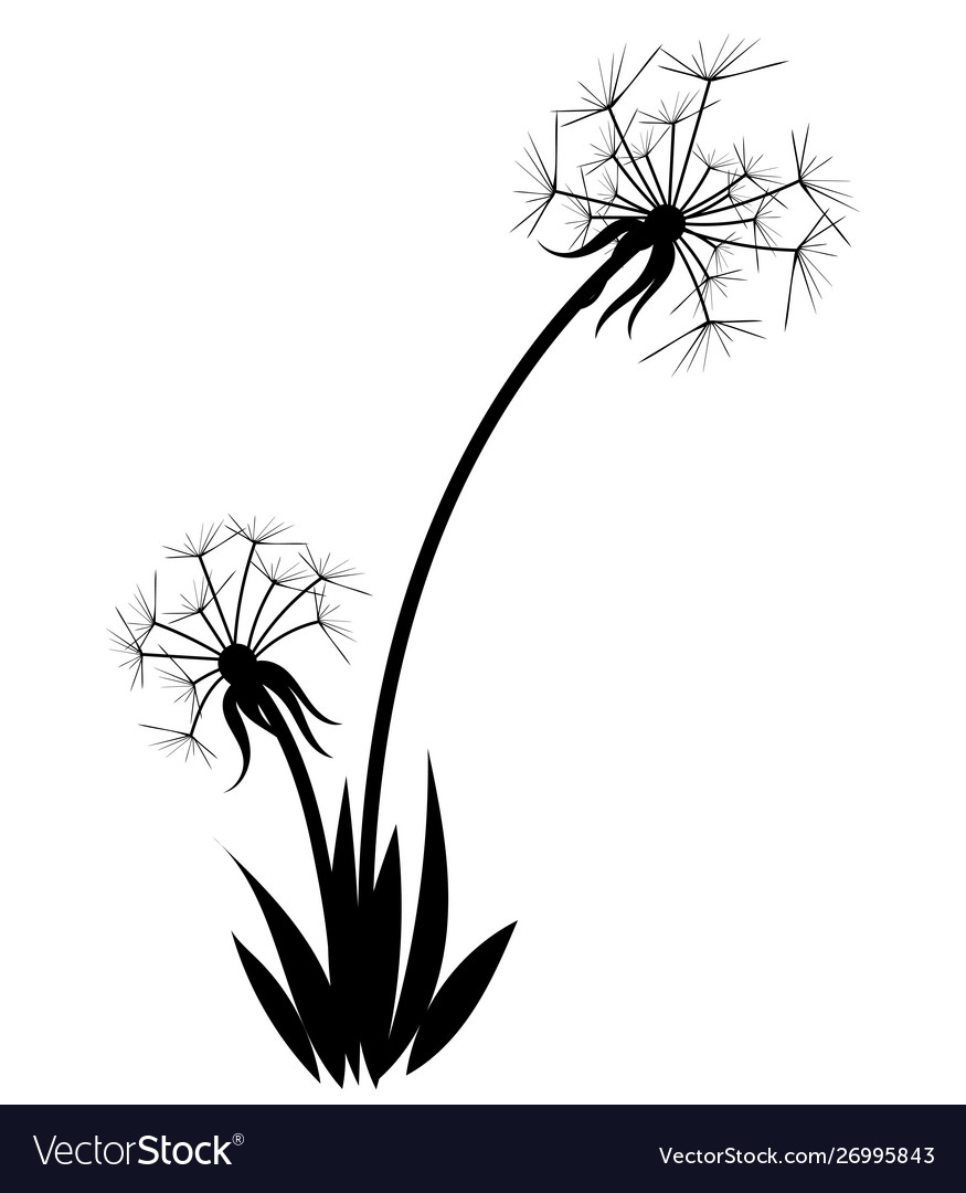 Silhouette a dandelion with flying seeds black