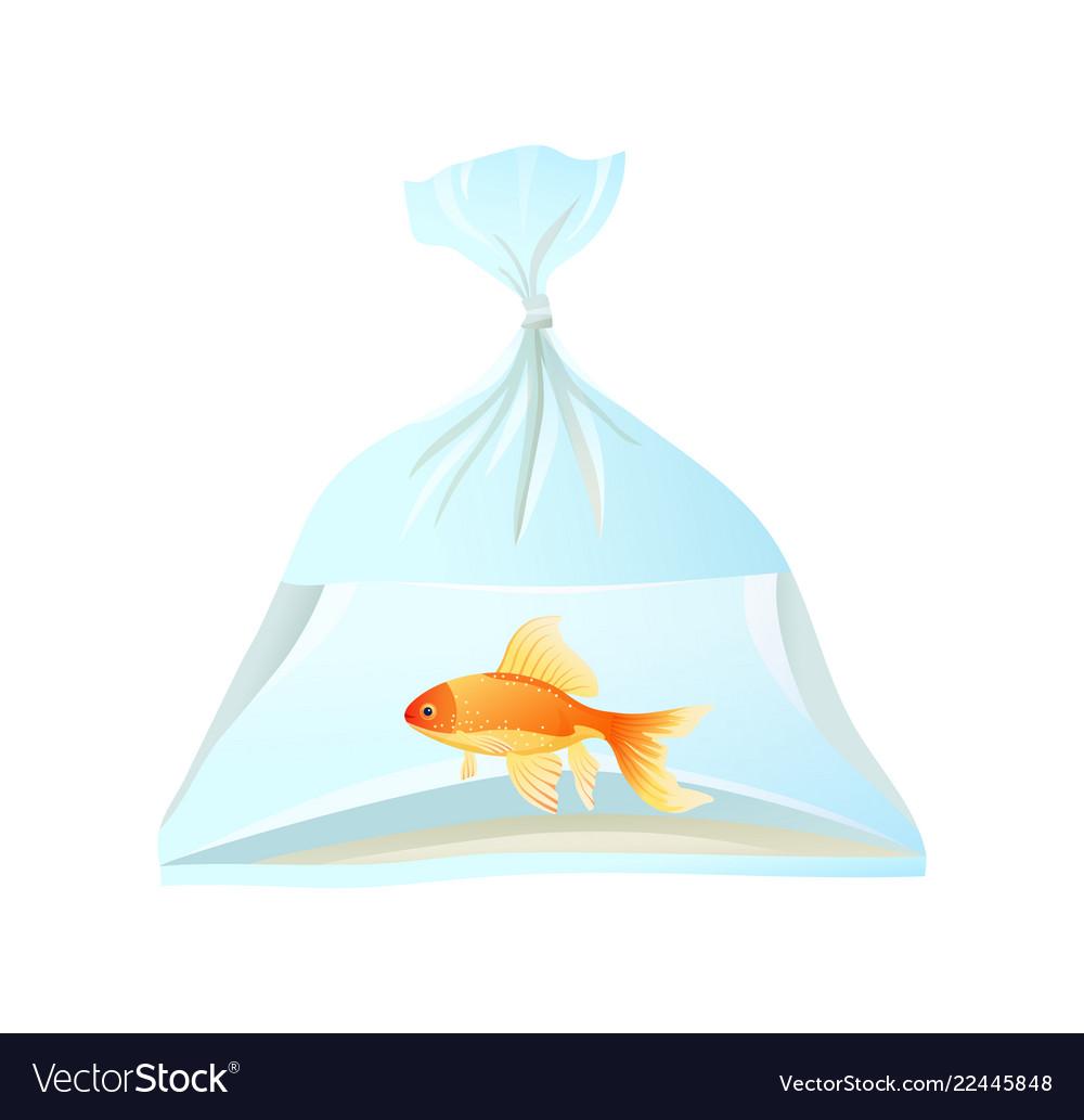 Goldfish Swim In Plastic Bag Tied With Rope