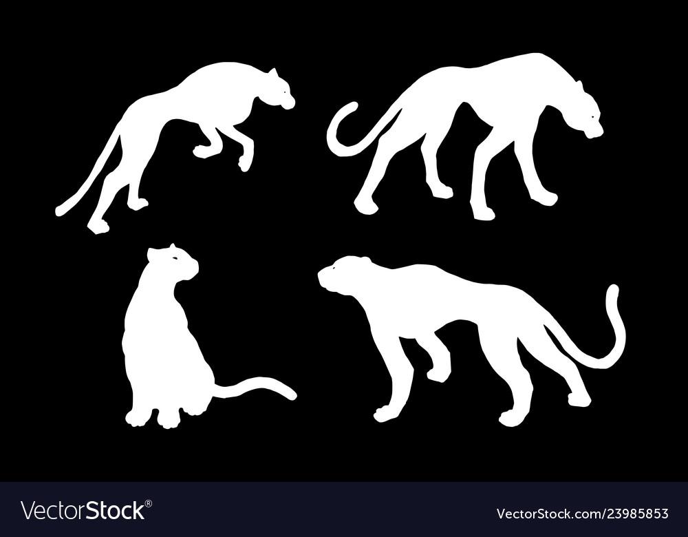 Drawn jaguar leopard wild cat panther