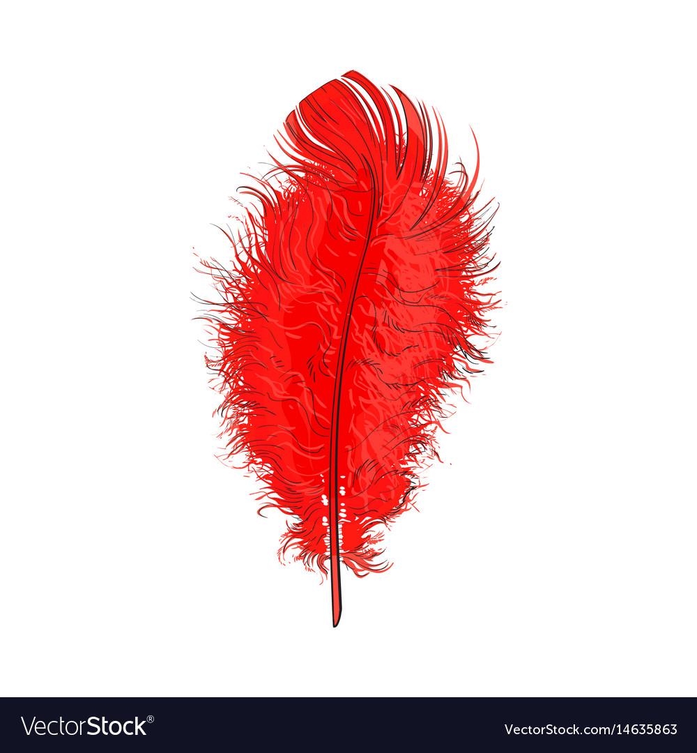 Hand drawn tender fluffy red bird feather sketch