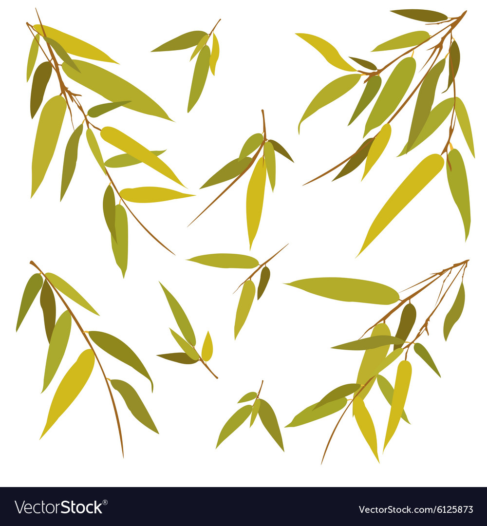 Bamboo branches isolated on white background