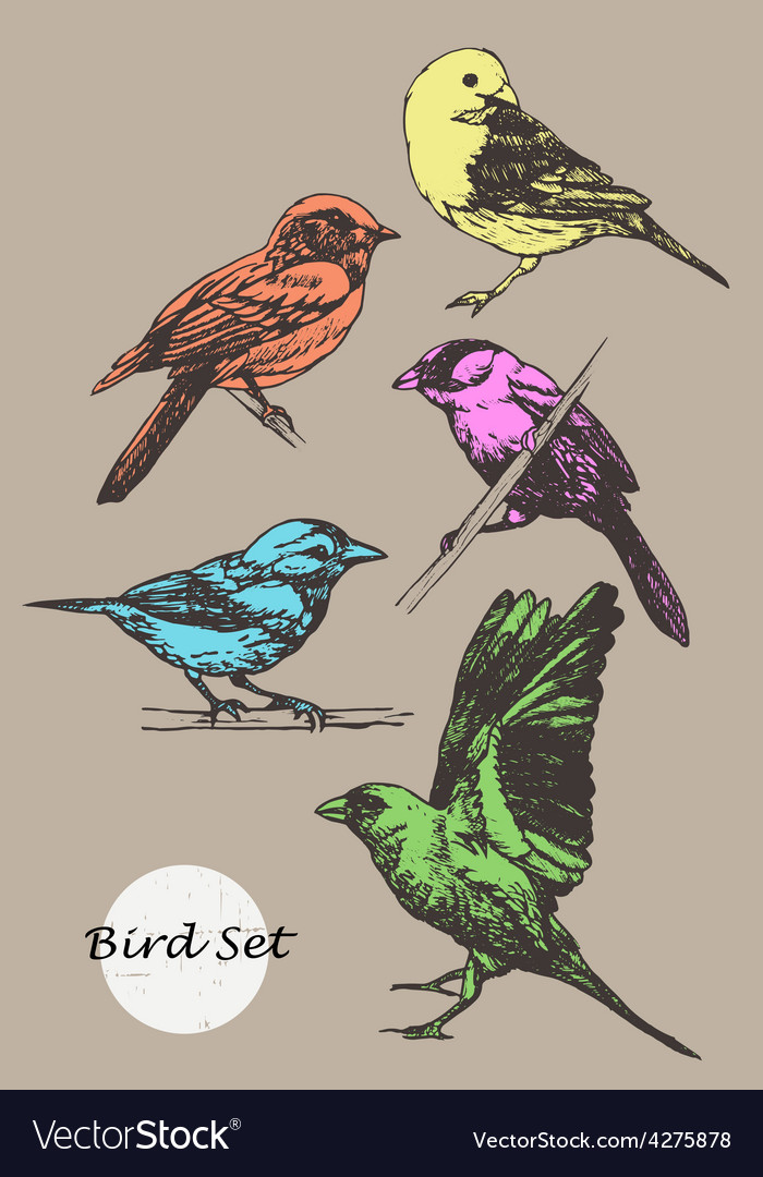 Set of hand-drawn birds