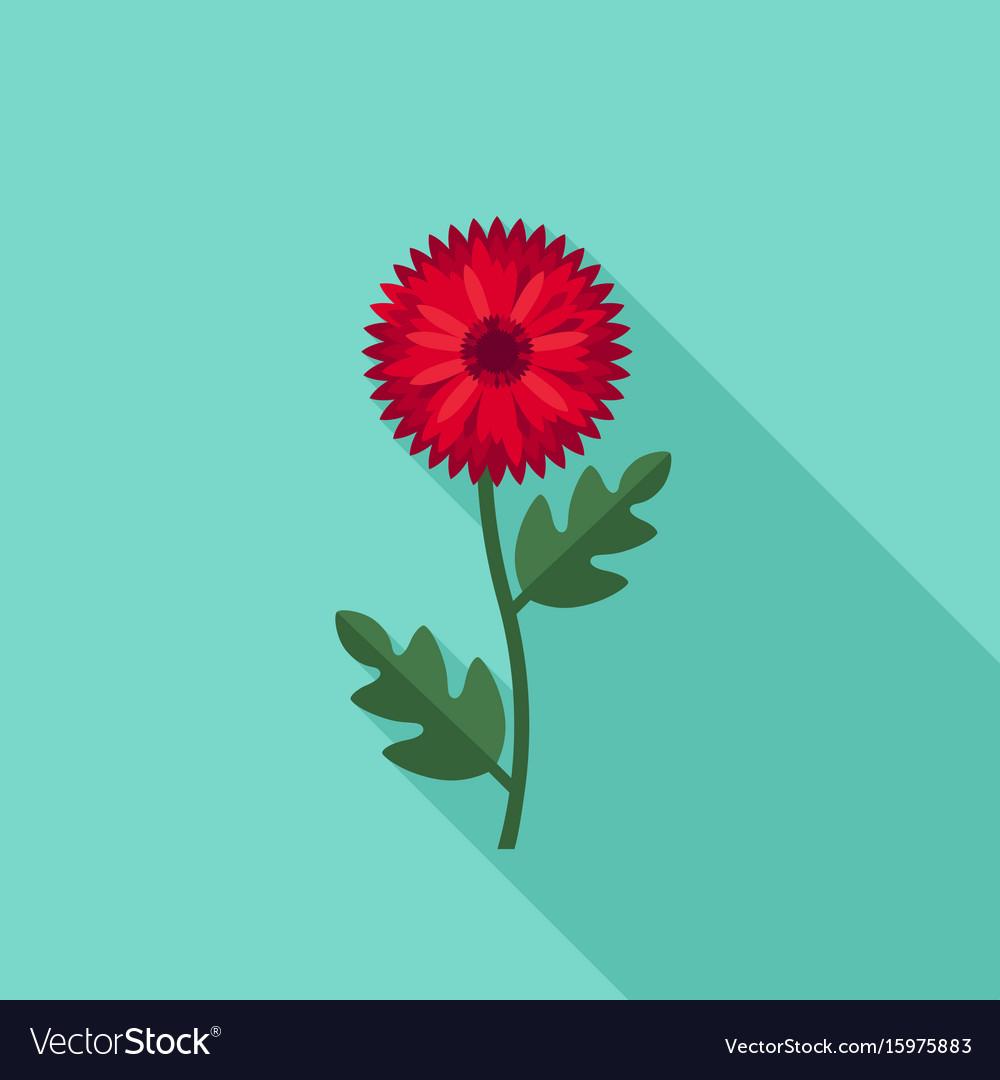Chrysanthemum flower icon