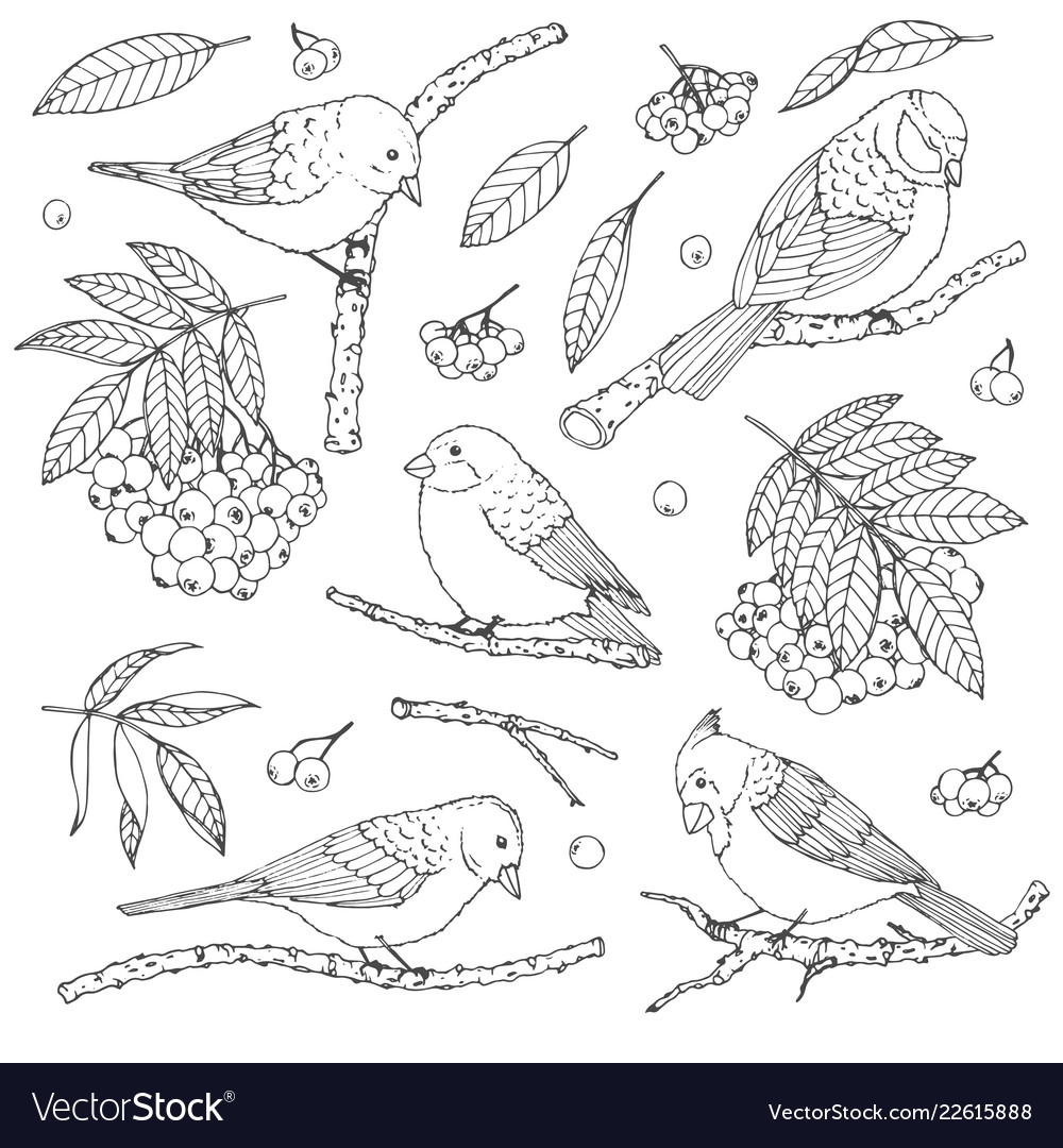 Hand drawn set of birds branches leaves