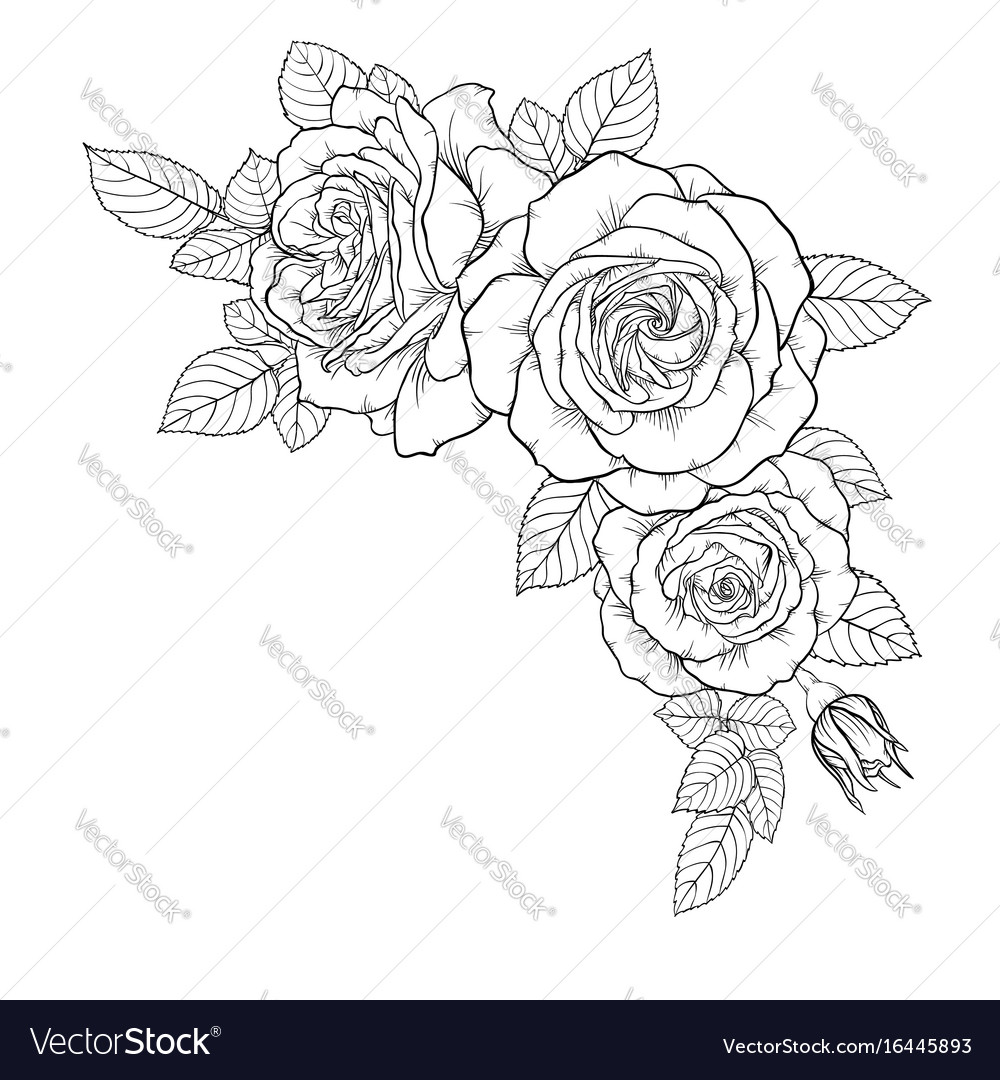 Beautiful black and white bouquet rose and leaves vector image