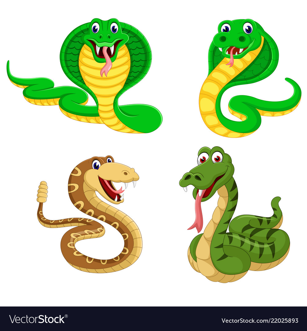 Collection of the big snakes