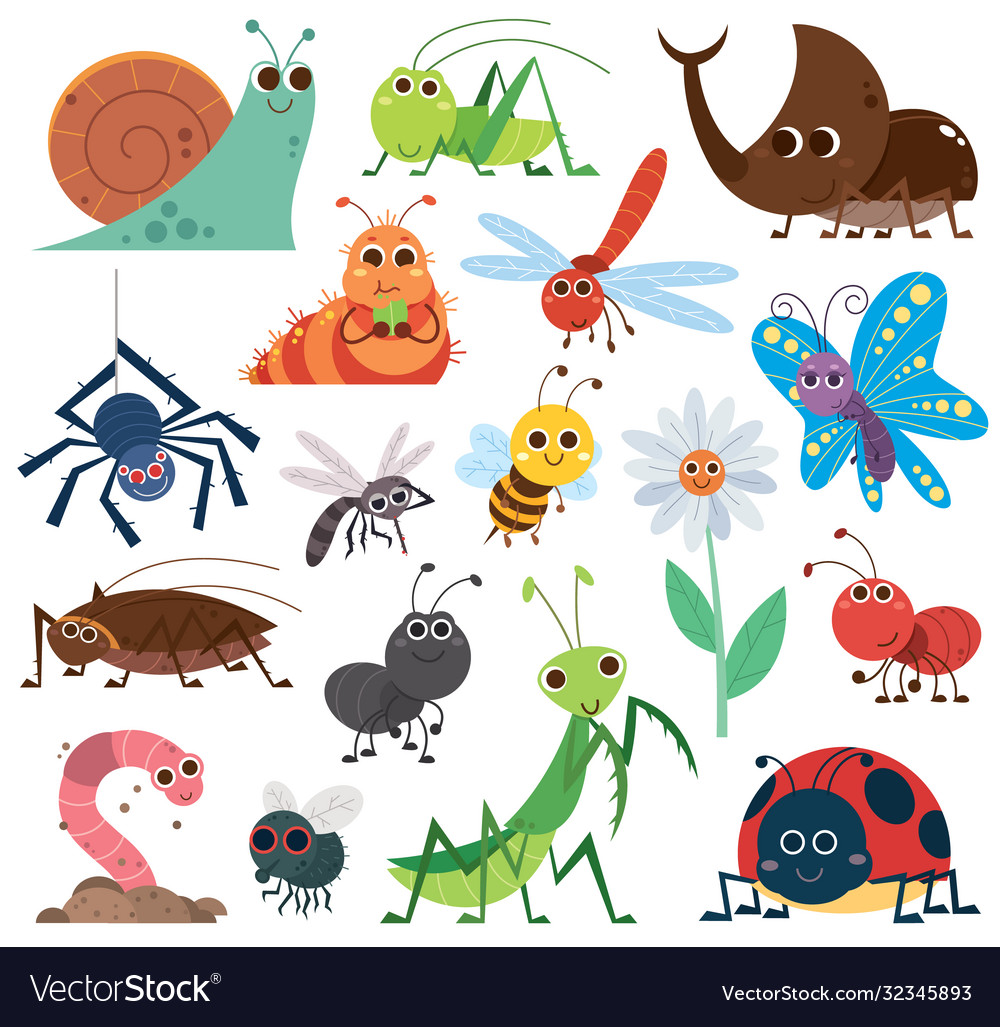Insect set