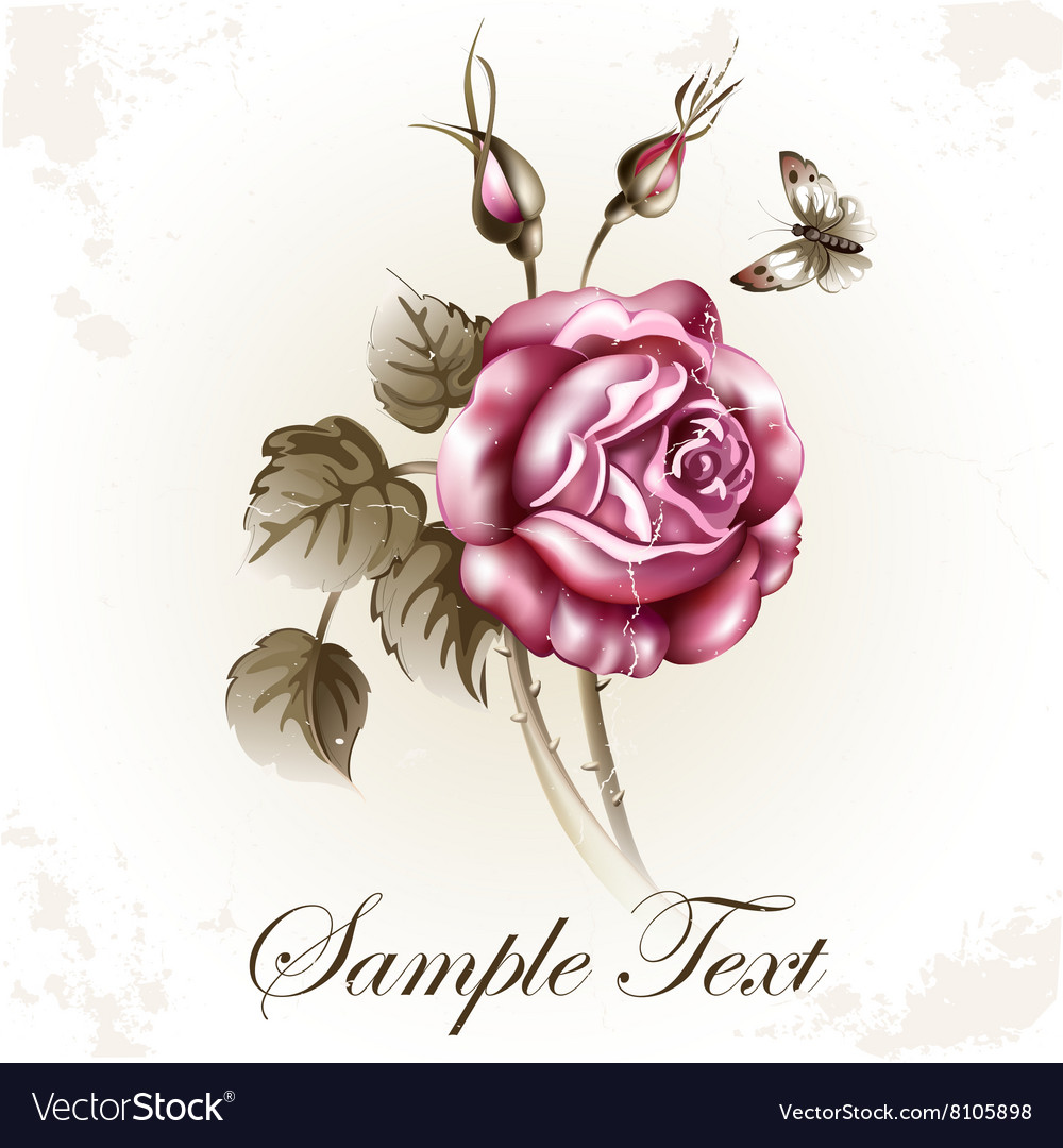 Rose flower and butterfly vector image