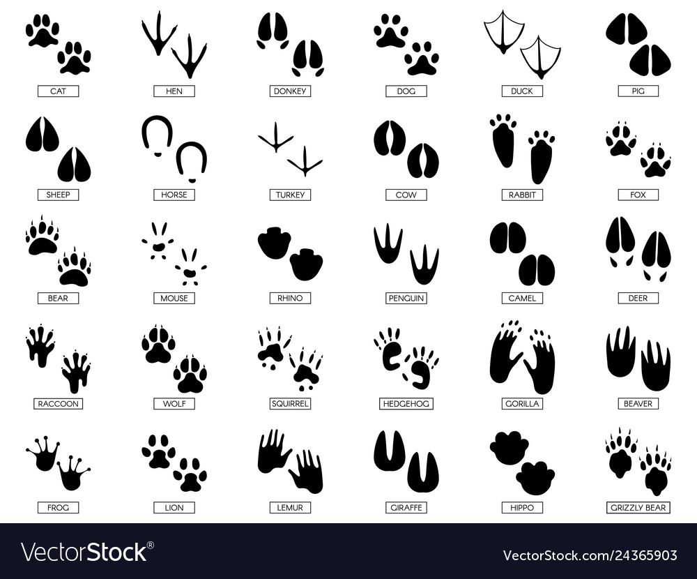 Animals footprints animal feet silhouette frog
