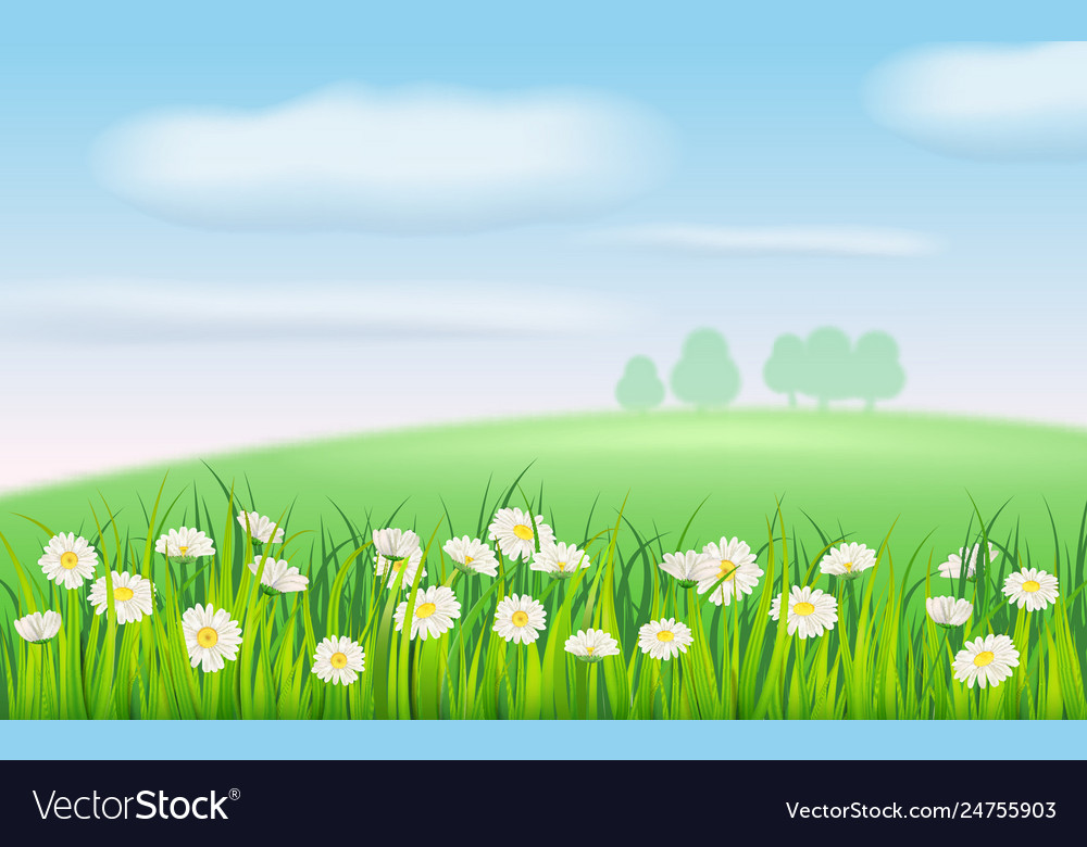 Spring field flowers daisies chamomile and