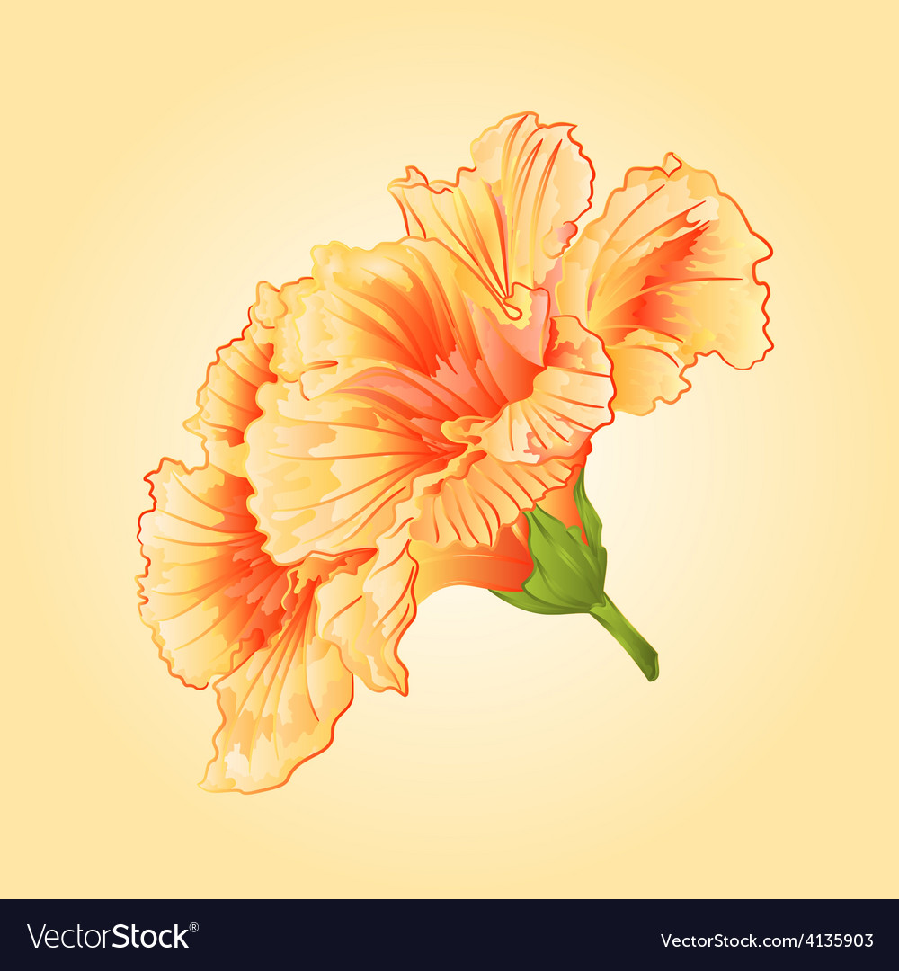 Yellow Hibiscus Tropical Flowers Blossom Simple Vector Image