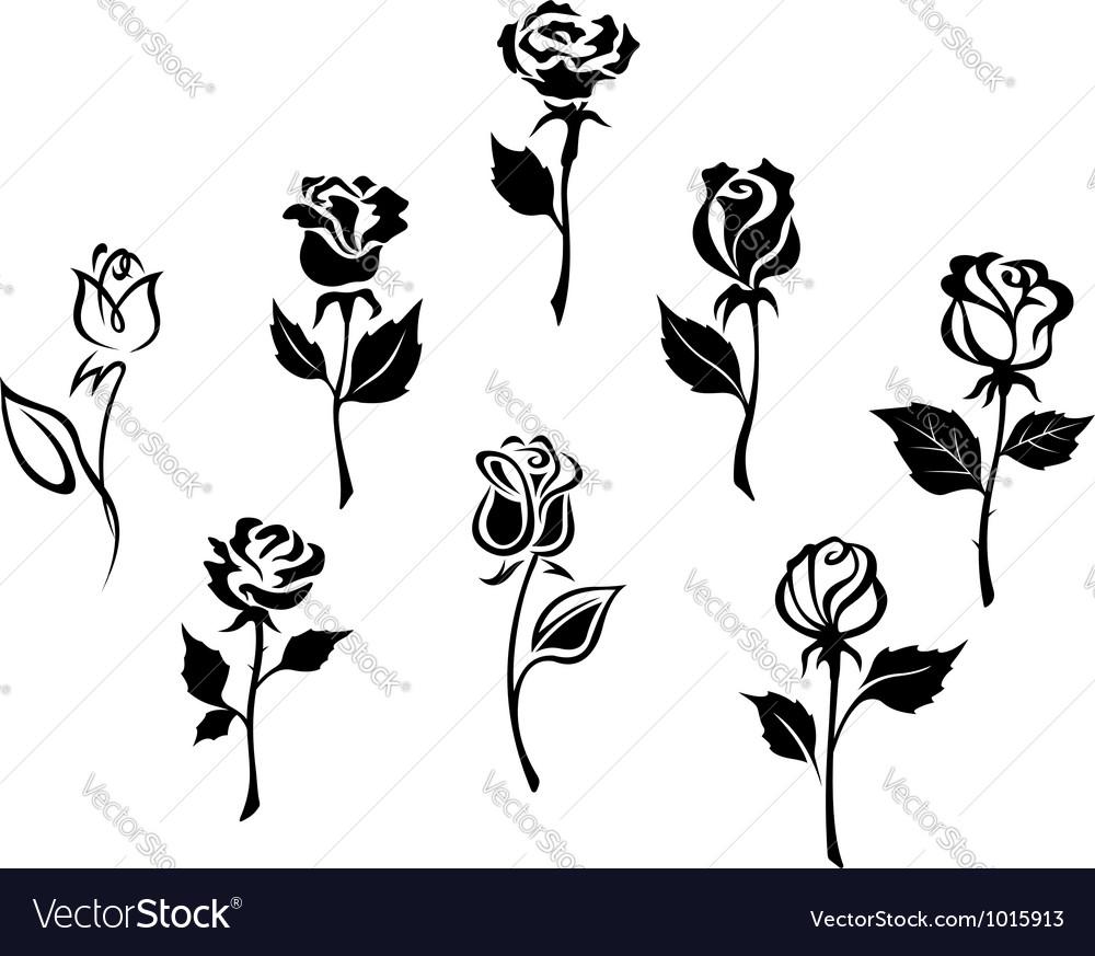 Beautiful roses silhouettes