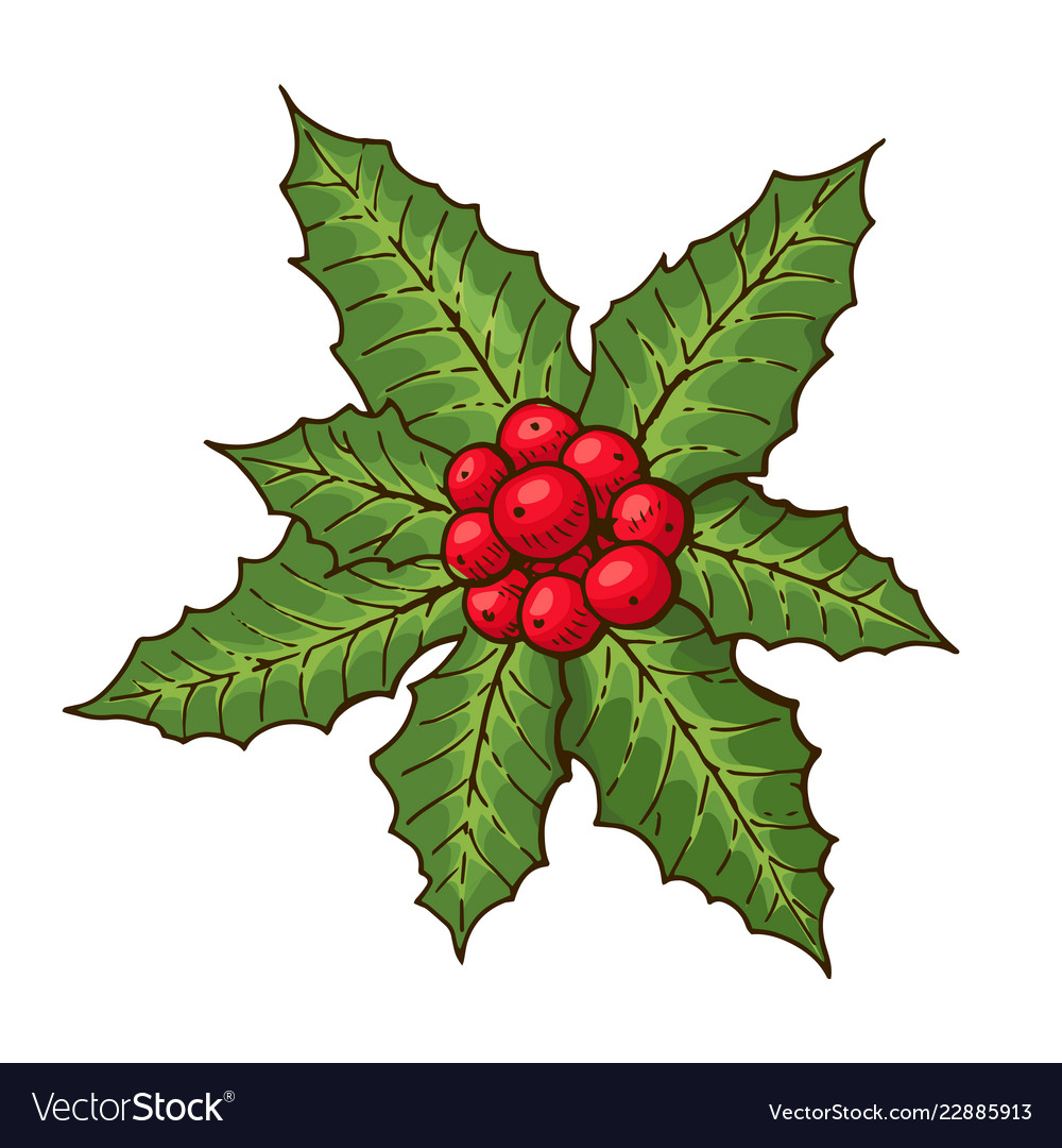Christmas mistletoe with red berries and green Vector Image