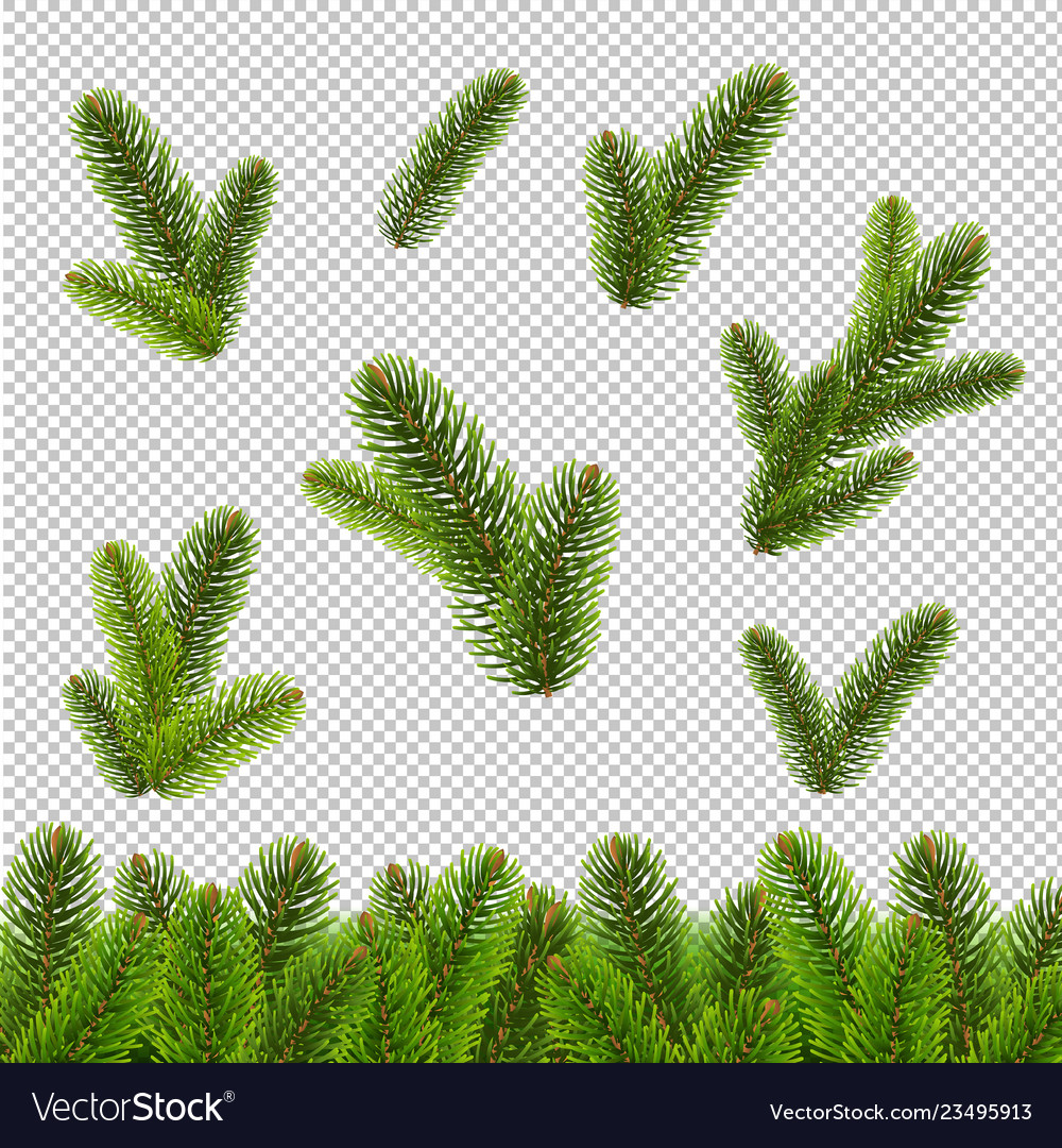 Fir tree isolated transparent background