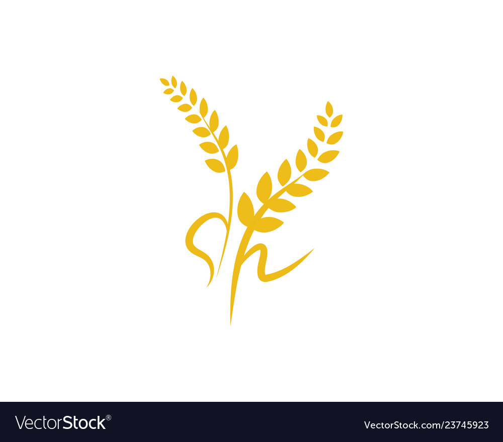 Agriculture wheat