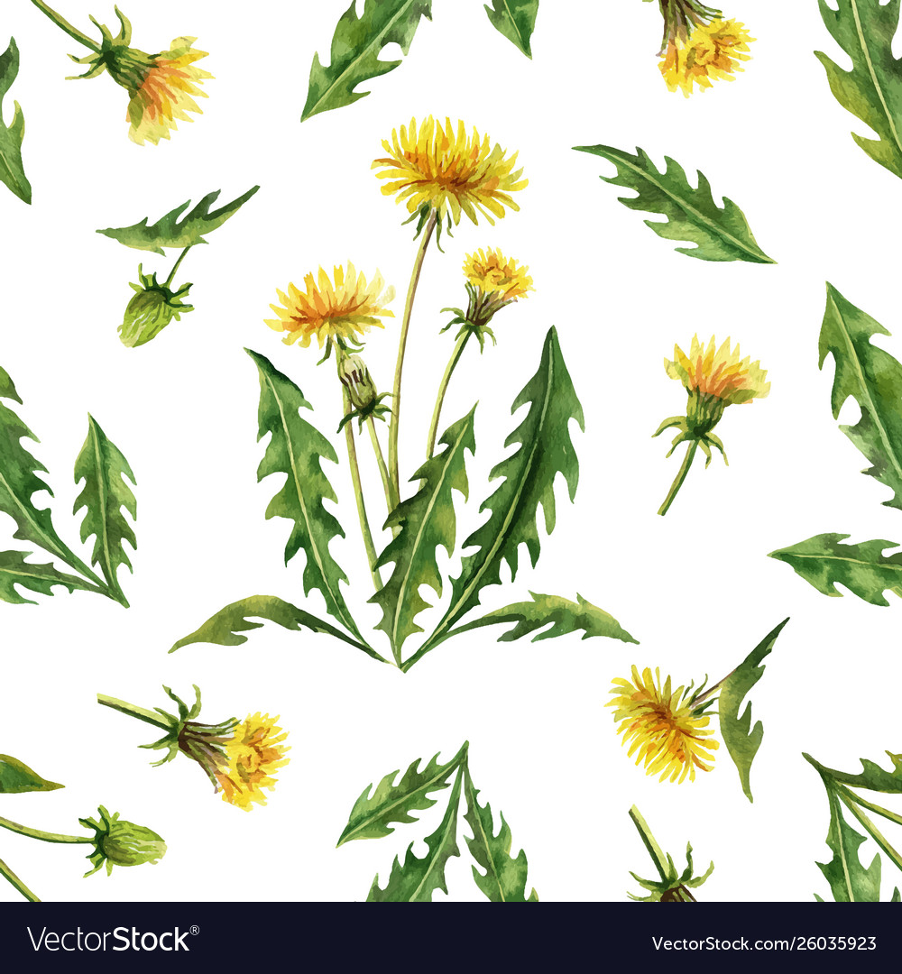 Watercolor seamless pattern with dandelion