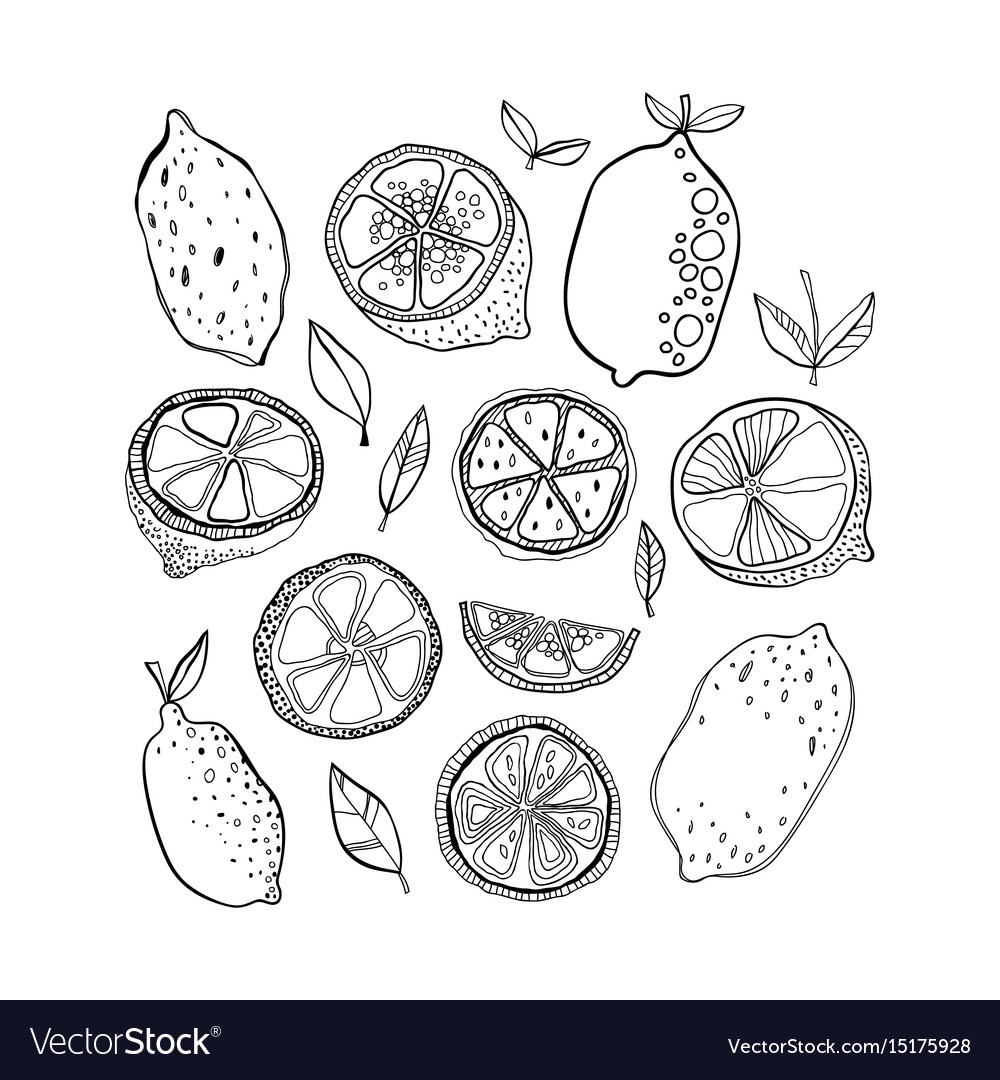 Lemons black and white citrus fruits for coloring