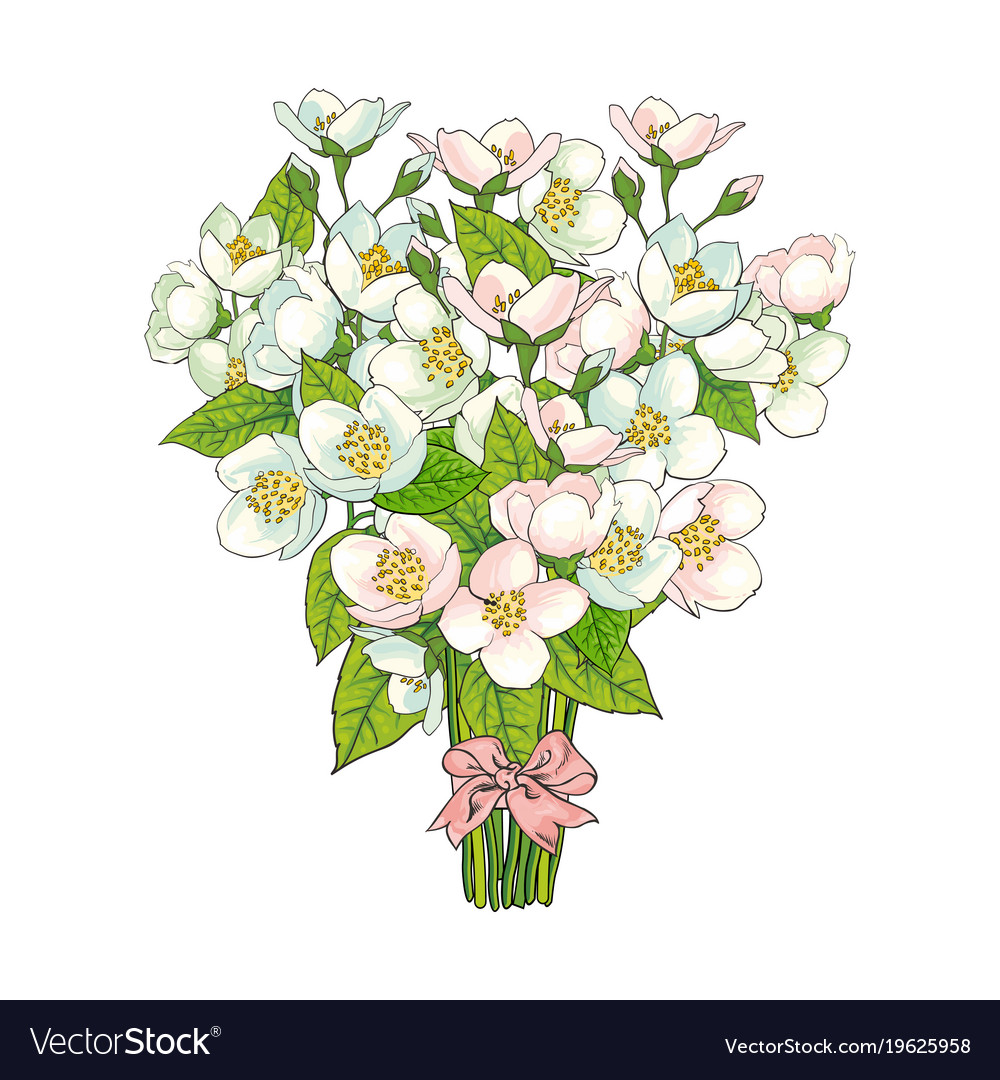 Bunch bouquet of cherry blossom flowers Royalty Free Vector