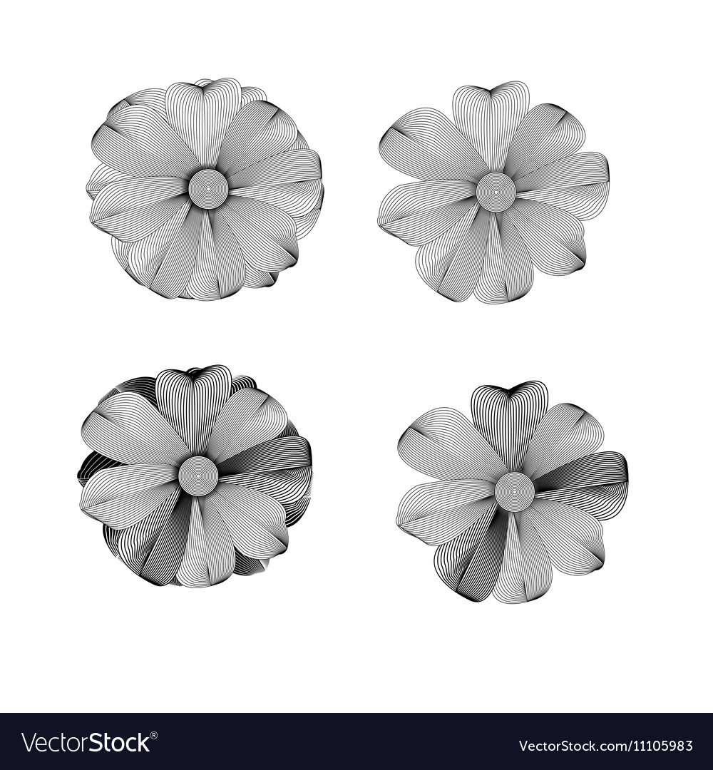 Black and white Flower lined pattern