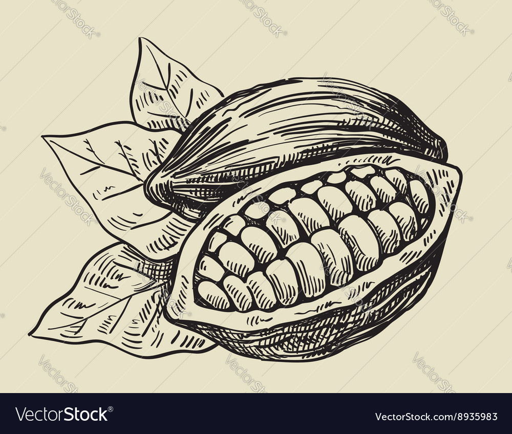 Black cacao beans vector image