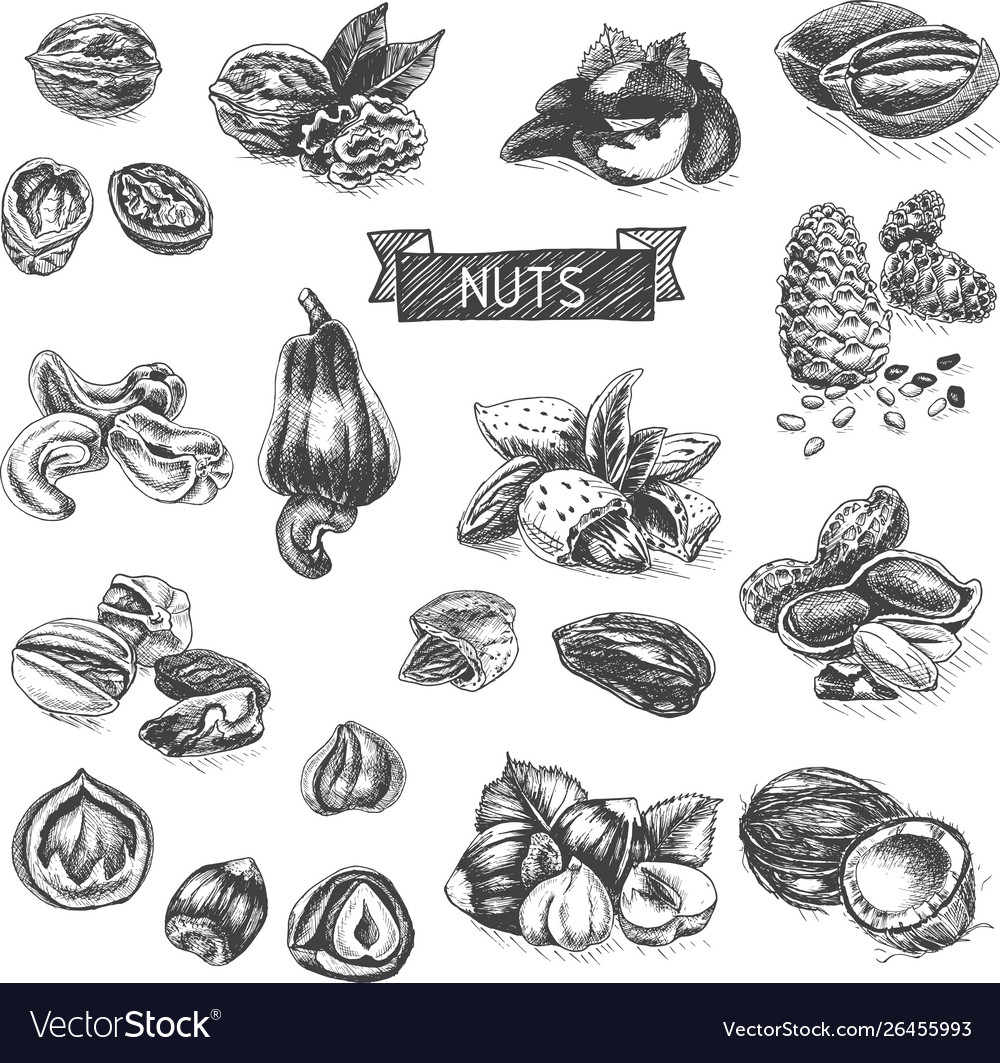 Background sketch walnuts peanut cashew