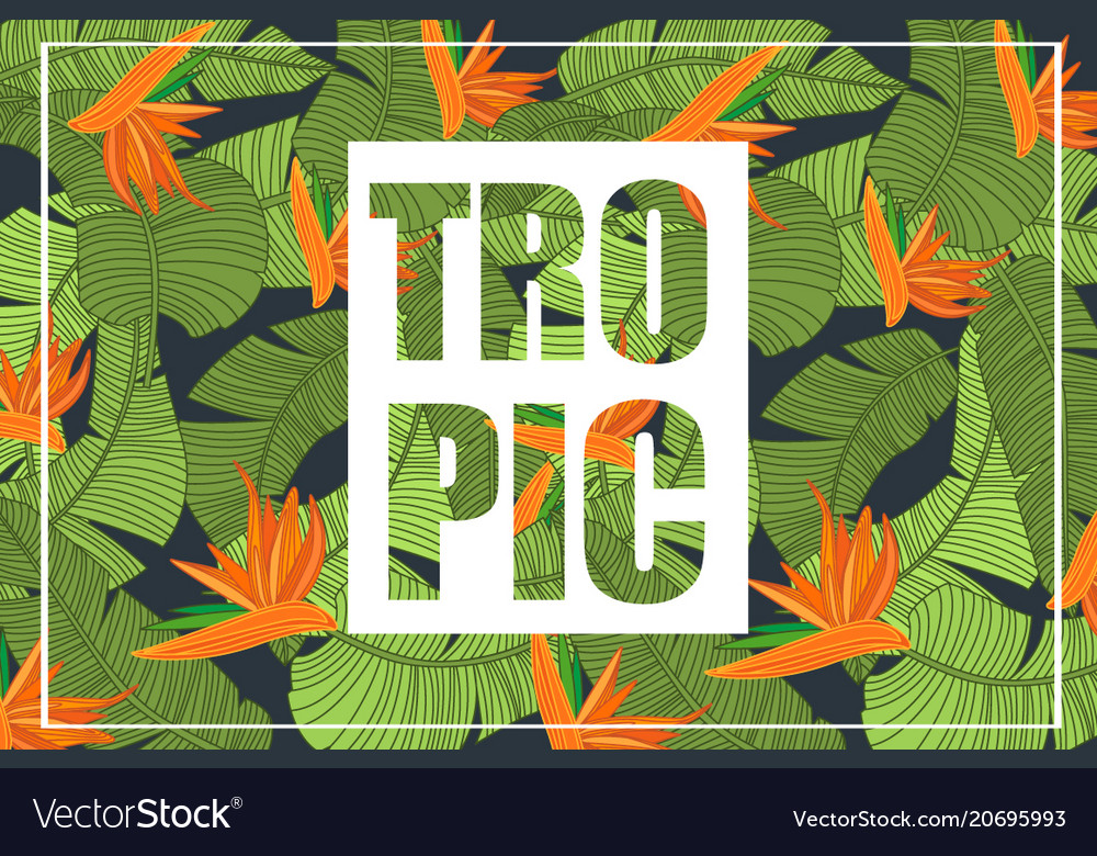 Tropic bright tropical design with exotic flowers