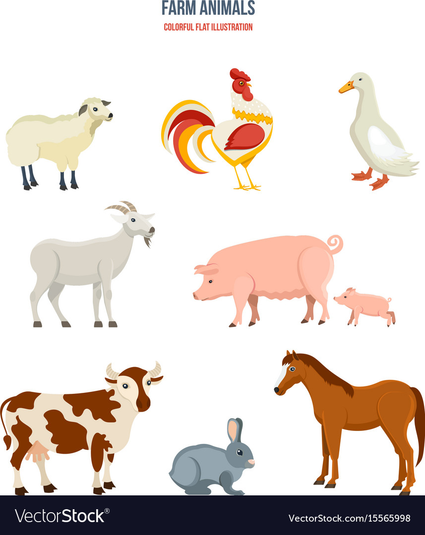 Set of different farm animals on white background
