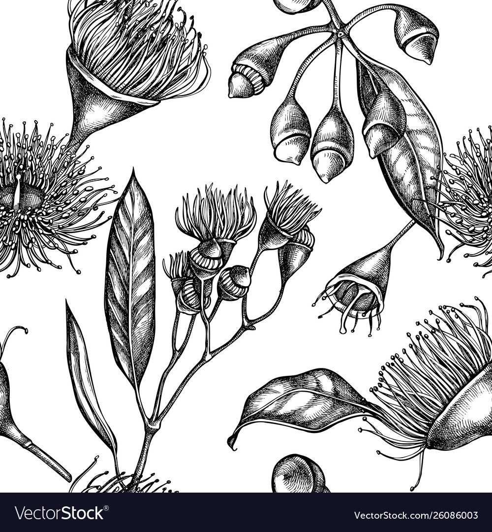 Seamless pattern with black and white eucalyptus