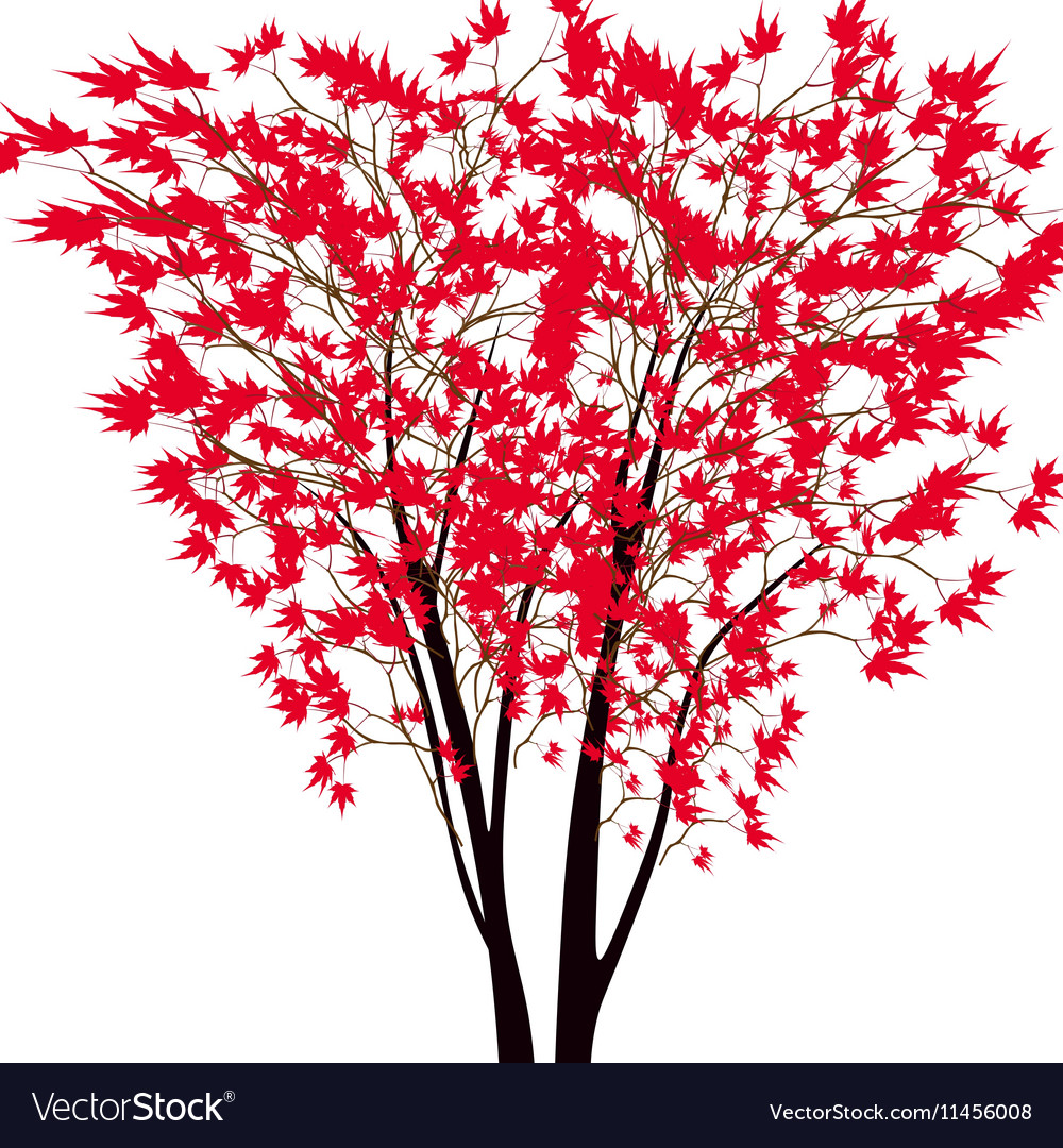 Card with autumn maple tree Red maple trees in