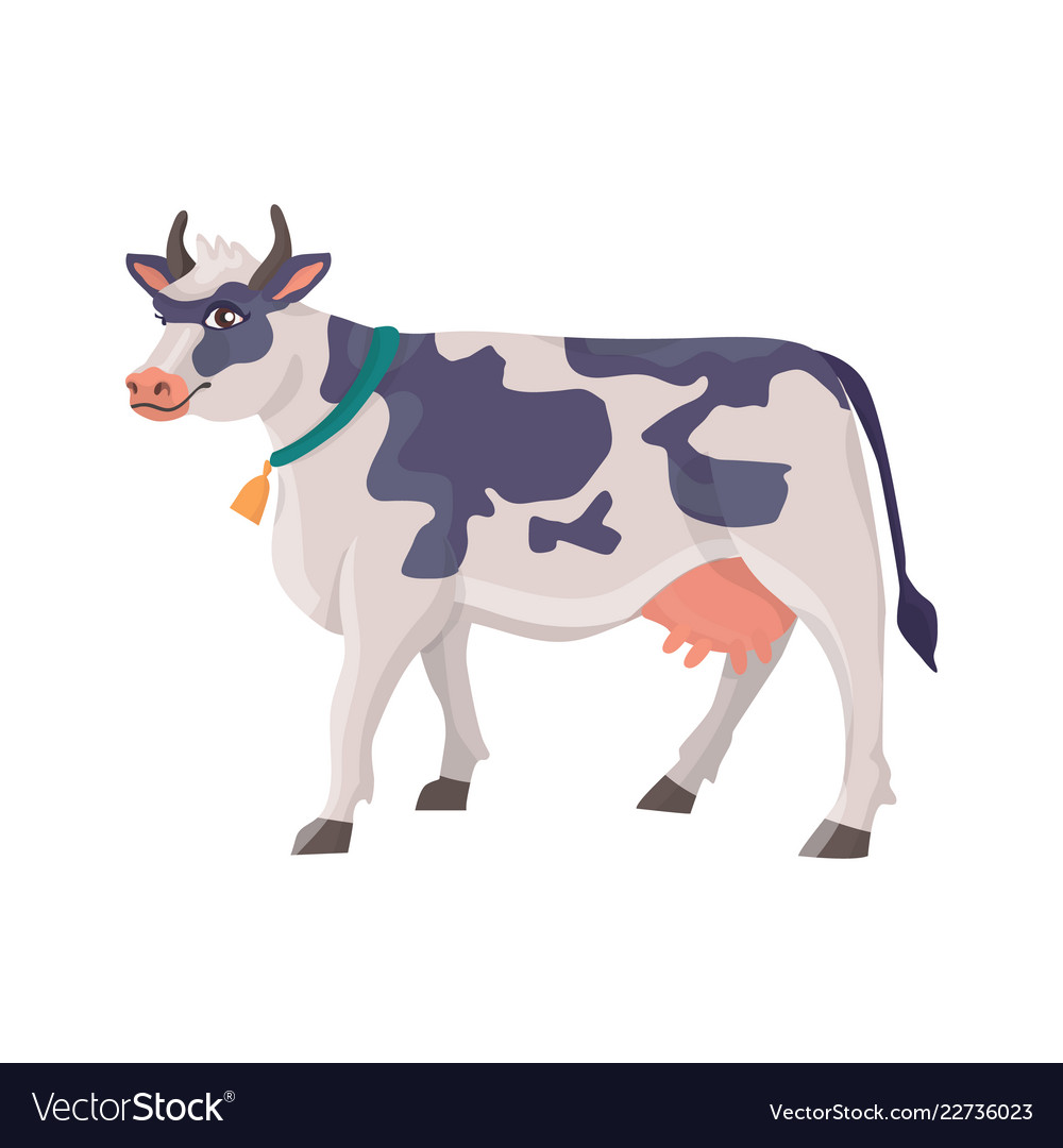 Cheerful cow in a collar with a bell