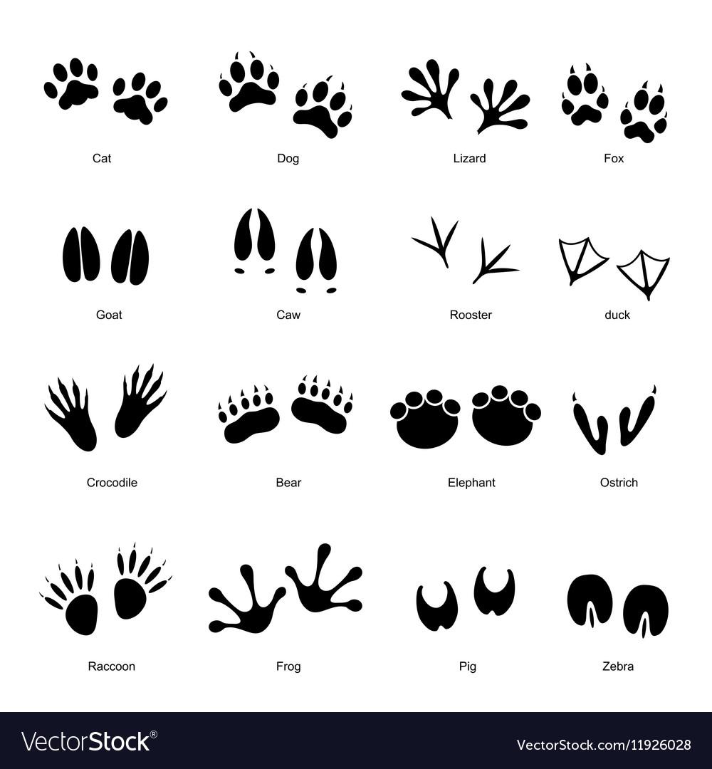 Black Animal Tracks Set vector image