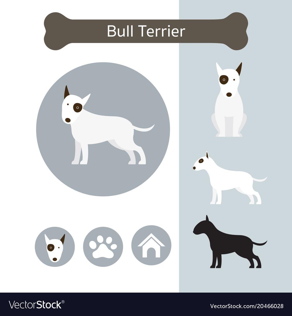 Bull terrier dog breed infographic