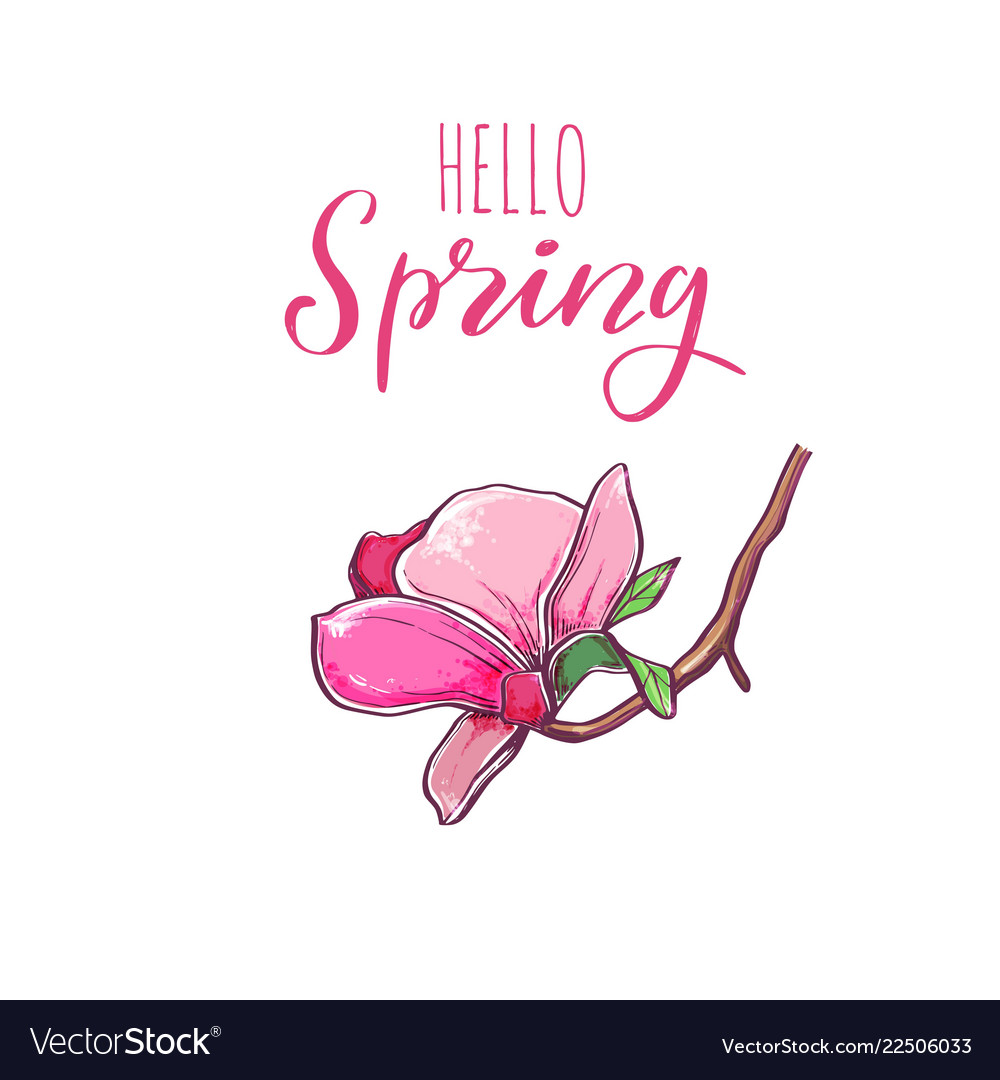 Magnolia flower with hello spring lettering