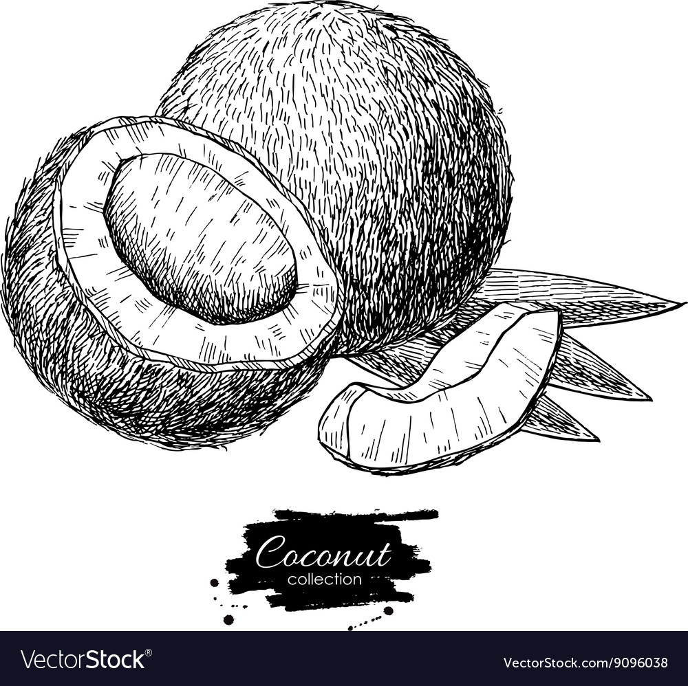 Hand drawn coconut Tropical summer fruit