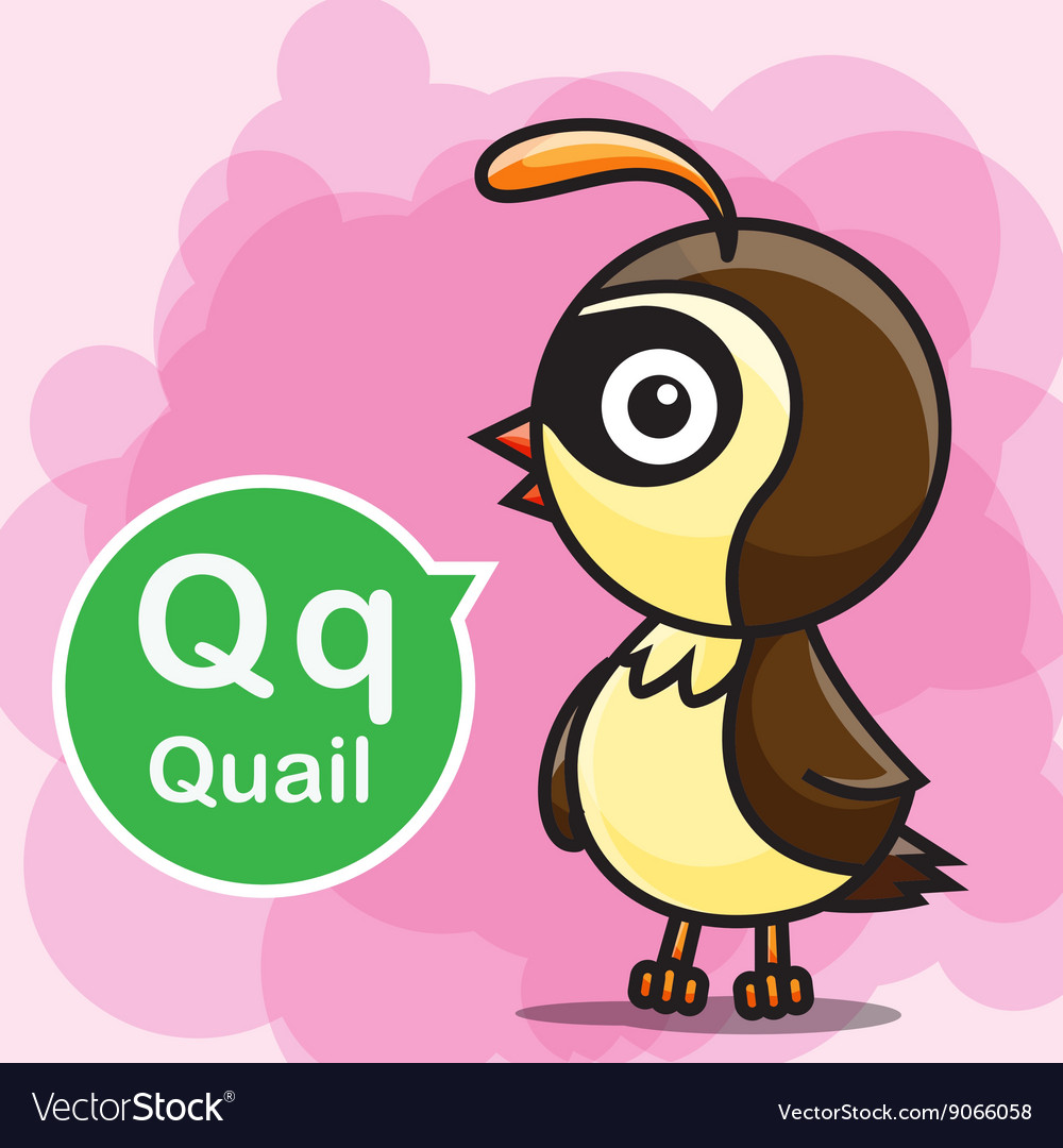 Q Quail color cartoon and alphabet for children to