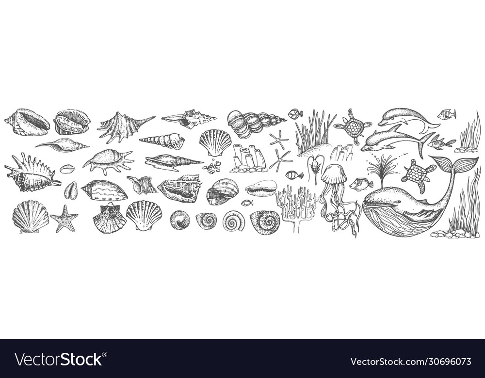 Big set shells and sea animals