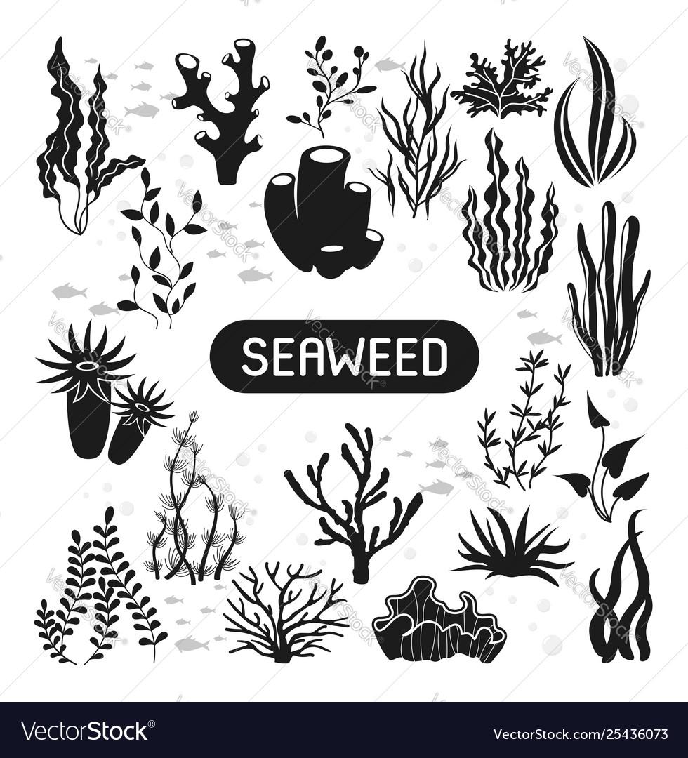 Underwater silhouettes seaweed coral and algae