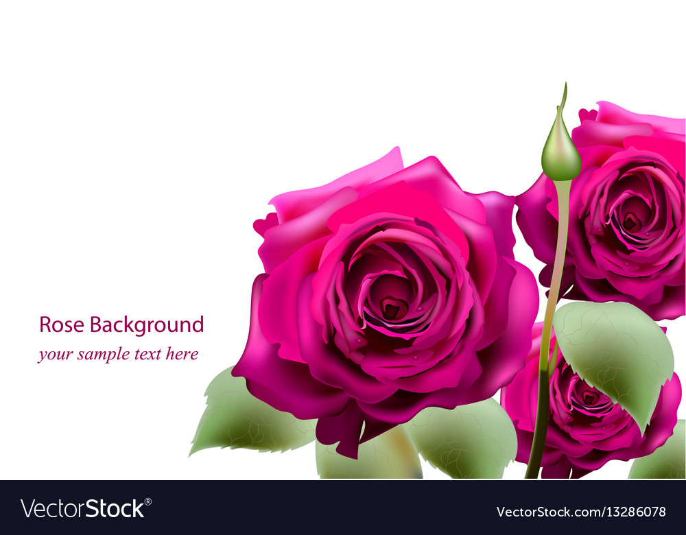 Realistic pink roses bouquet beautiful flowers vector image