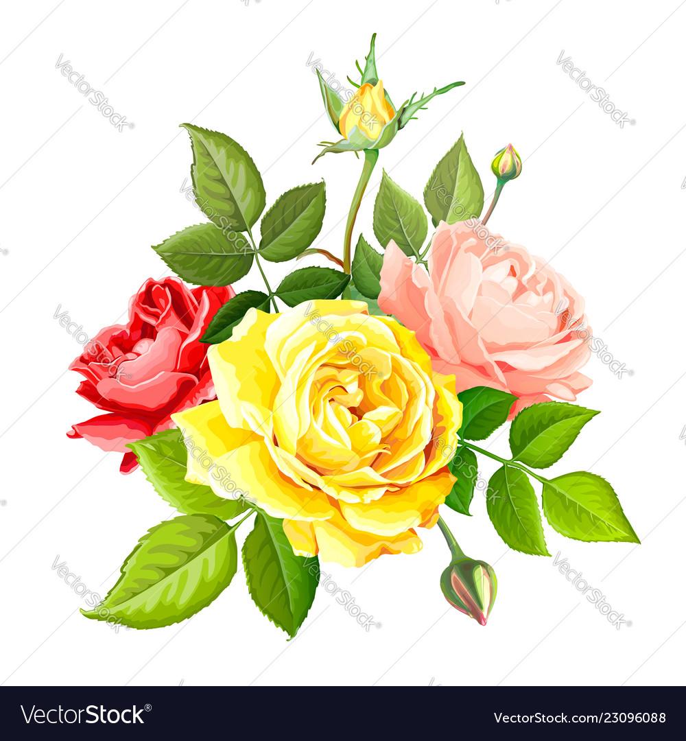 Lovely Rose Flower Royalty Free Vector Image Vectorstock