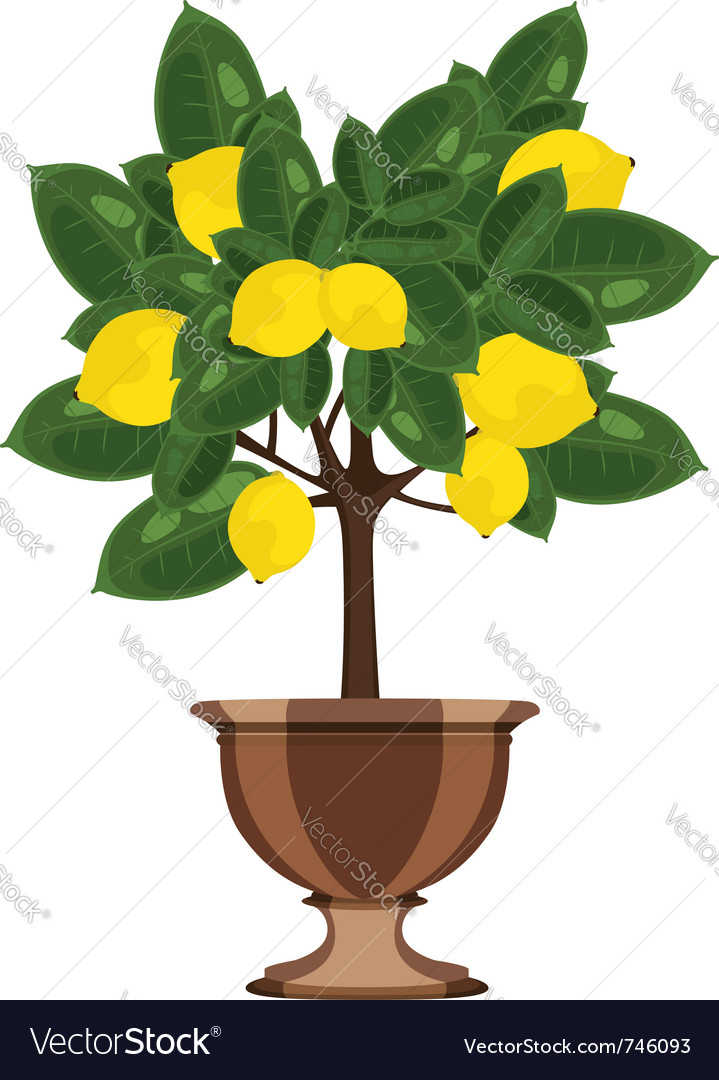 Lemon tree in a flowerpot vector image