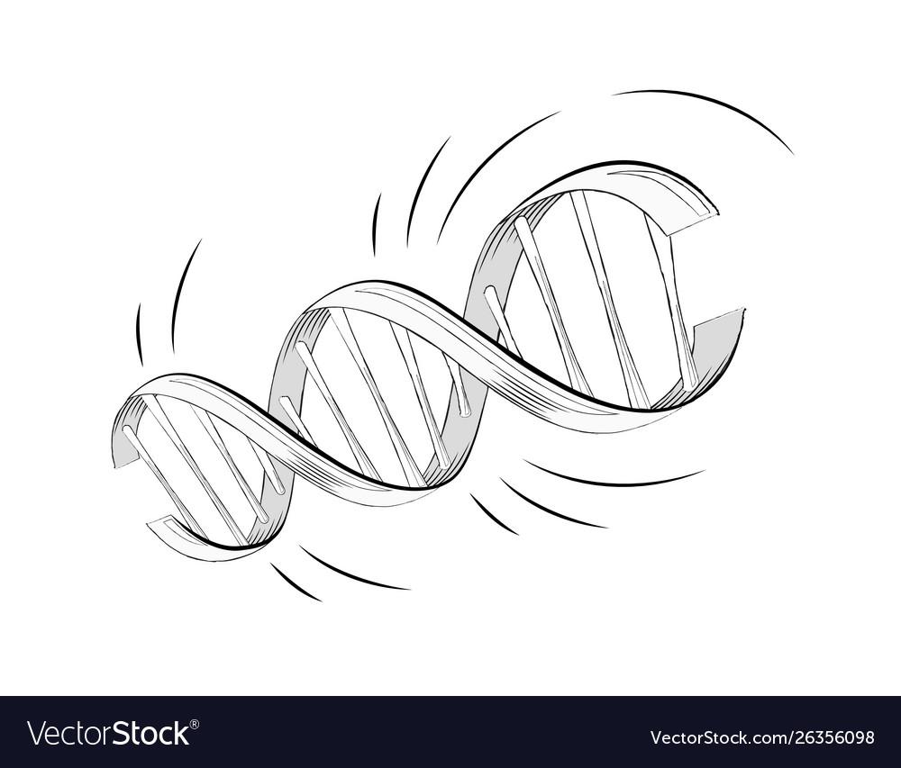 Realistic dna helix molecule with genes