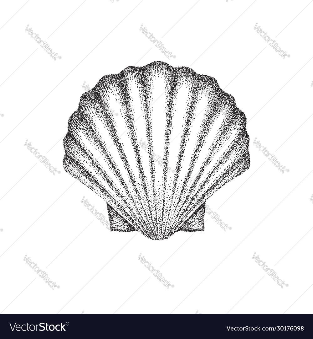 Scallop shell dotwork art