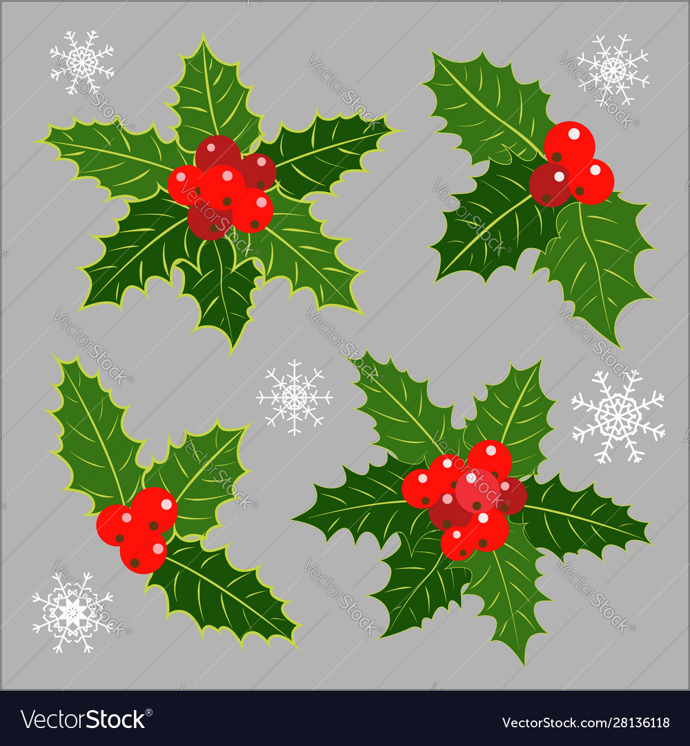 Christmas decoration holly leaves collection